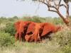 Éléphants rouges après un bain de poussière (Kenya)