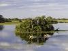 Habitat typique du cobe de Lechwe : plaine inondée et îlots couverts de palmiers, delta de l'Okavango (Botswana) © Dana Allen