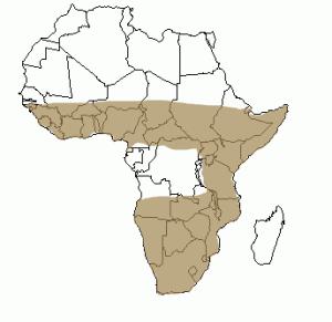 Répartition géographique de la genette en Afrique