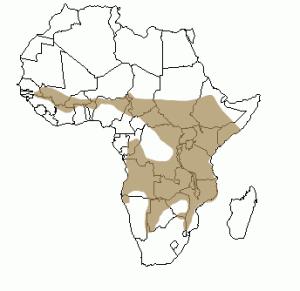 carte repartition lion 300x291 Lion, répartition géographique du lion en Afrique