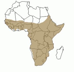 Répartition géographique de l'oryctérope en Afrique
