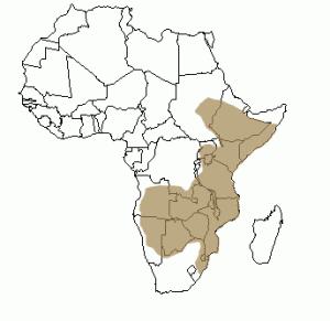 Répartition géographique du pangolin en Afrique