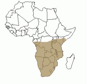Répartition géographique du porc-épic en Afrique