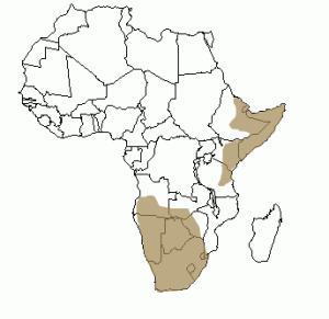Répartition géographique du protèle en Afrique