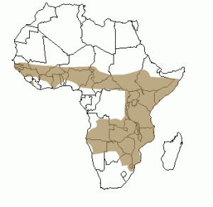 Répartition géographique du serval en Afrique