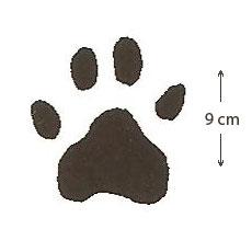 Empreinte de léopard