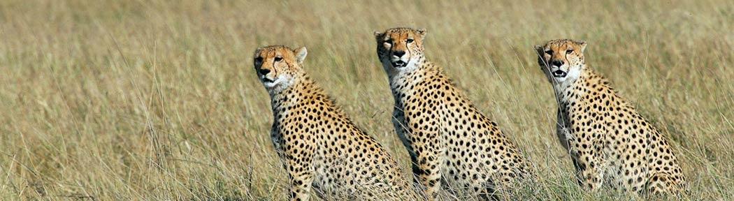 image animaux safari