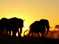 Photo elephants au coucher du soleil • Camp Hwange  • Hwange National Park