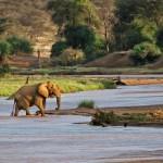 La rivière du parc national de Samburu, Kenya
