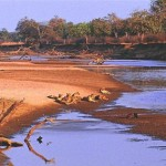 Rives de la rivière Luangwa, Parc national de South Luangwa, Zambie