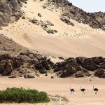 Le décor aride et majestueux du nouveau camp