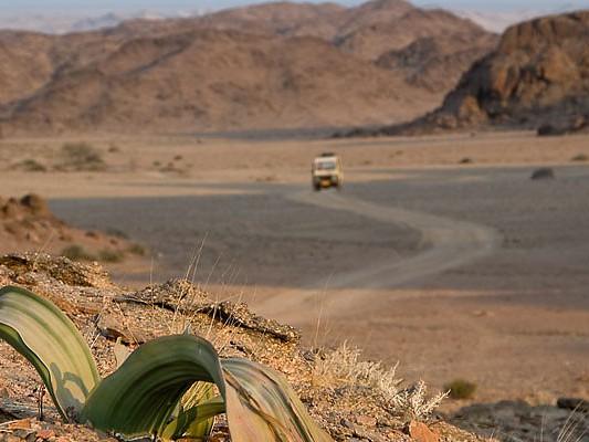 safari desert hoanib namibie