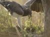aigle-martial-79-Photo-A-et-M-Allemand
