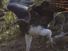 aigle-martial-Dsc2457