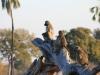 Jeunes babouins qui surveillent les environs, parc national Hwange (Zimbabwe) © ae