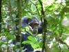 Chimpanzé dans la forêt de Kibale (Ouganda)
