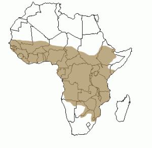 Répartition géographique de la civette en Afrique