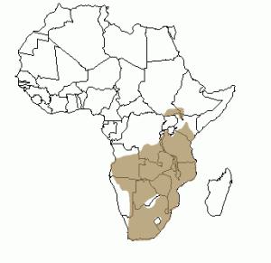 Répartition géographique de l'éland en Afrique