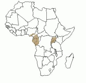Répartition géographique du gorille en Afrique
