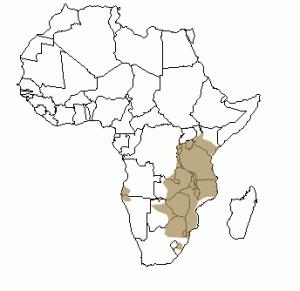 Répartition géographique de l'impala en Afrique