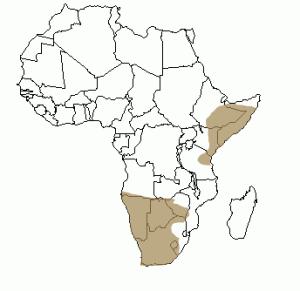 Répartition géographique de l'otocyon en Afrique