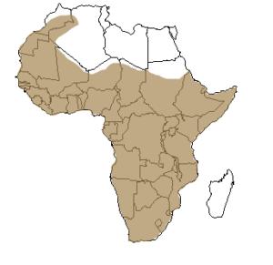 Répartition géographique du ratel en Afrique