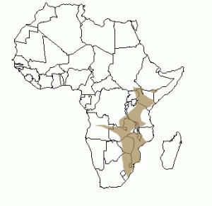 Répartition géographique du zèbre en Afrique
