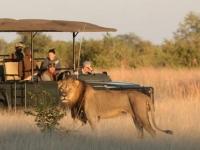 Photo lion safari  • Camp Hwange  • Hwange parc national