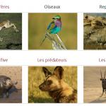 Guide des animaux de safari en afrique - catégories