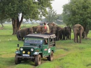 Safari en 4x4 au Sri-Lanka