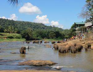 L'orphelinat des éléphants